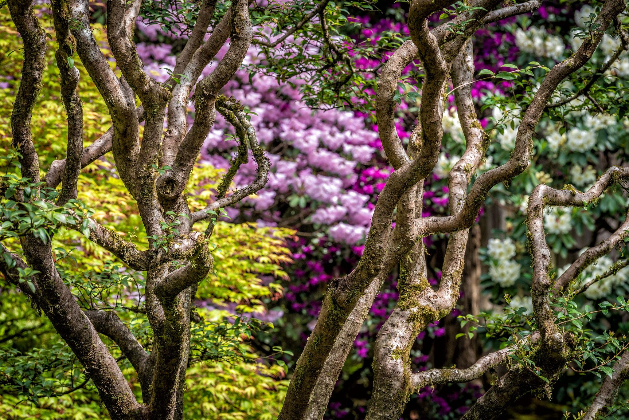 At-the-Garden