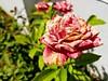 Wilt flower