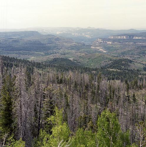 utah forest landscape cedarbreaks film 120 portra400 hasselblad 120mm