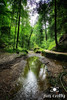 May in Hocking Hills by Jim Crotty