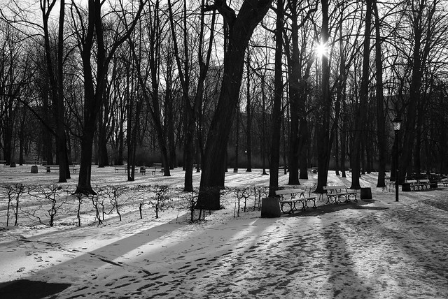 Winter light and shadows