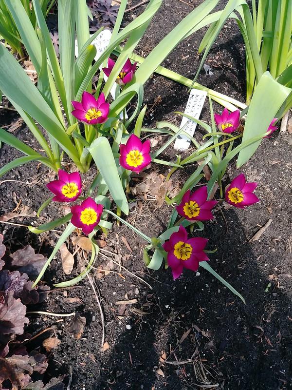 Le jardin de Lavandula 2018 - Page 3 41909188971_6c1259cfaf_c