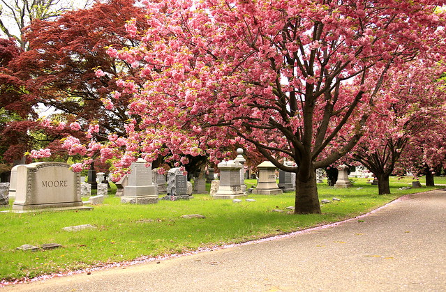 Flushing Cemetery #5, Canon EOS 6D, Canon EF 28-300mm f/3.5-5.6L IS