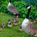 Dulwich Park Locals