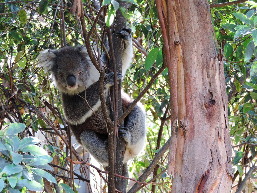 Great Otway National Park, Victoria, Australia
