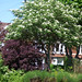 Sir Johns Road, Selly Park - trees at the Fourth Avenue junction