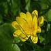 Spring in Kadriorg by Bluesrose