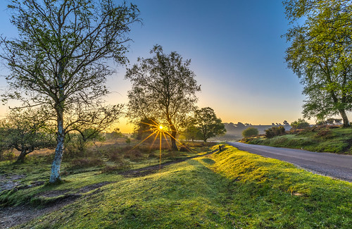 landscape newforest rockfordcommon tree sun sunrise road flare grass