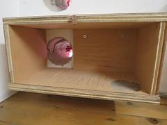 De eerste opgehangen observatie-nestkast.