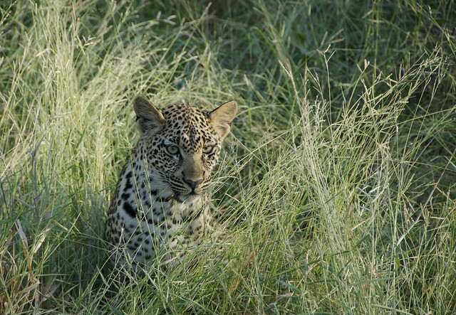 Africa 2018_SouthAfrica_092
