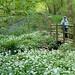 Uffmoor Wood, Halesowen, West Midlands