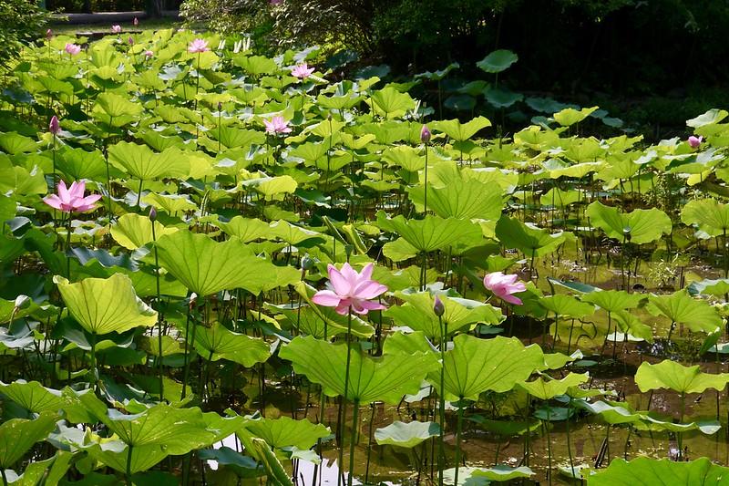台北植物園2018