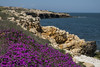 Bisceglie by An Tonia