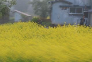 トランスイート四季島 1泊2日コース, 菜の花