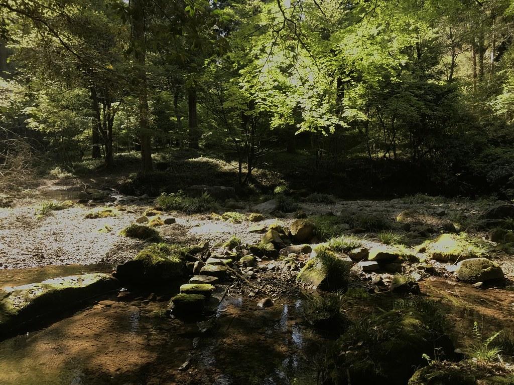 悠久の森の道中2