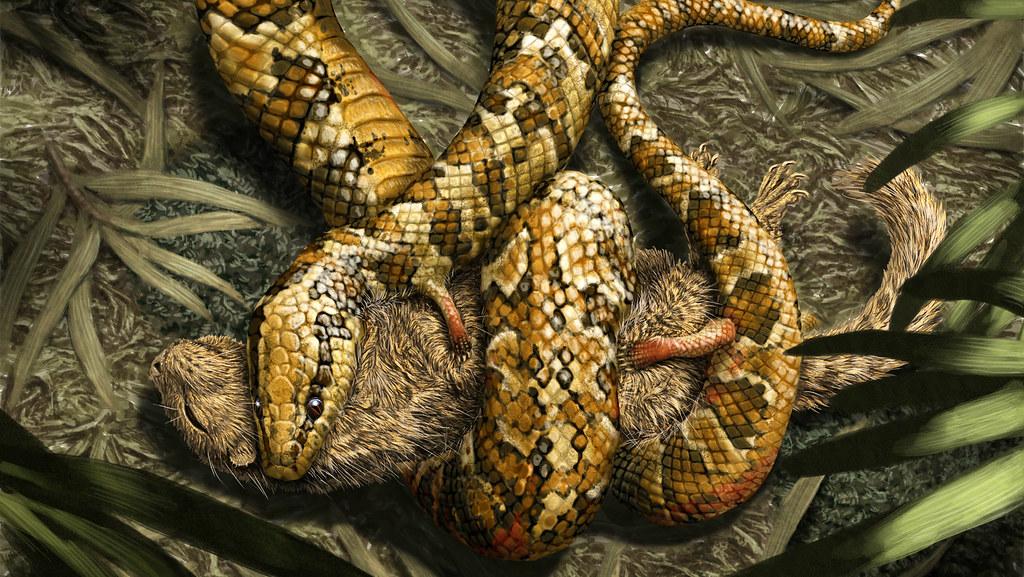Four legged snake(16;9)