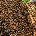 Margaret's bees