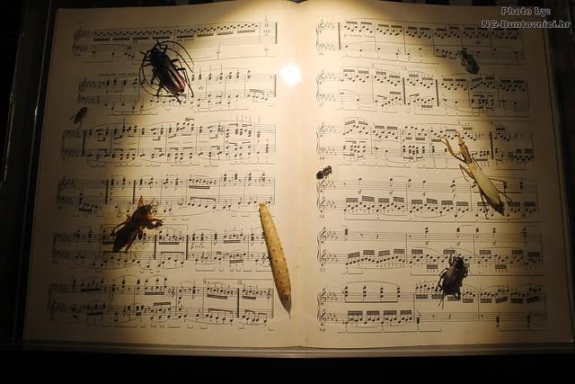 Najmanji orkestar