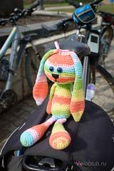 Радужный заяц