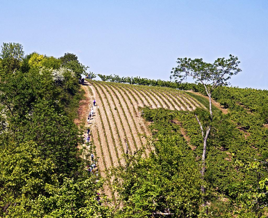 Pierre De L Yonne 18 0855 - yonne, coulanges-la-vineuse, randonnée gourmande