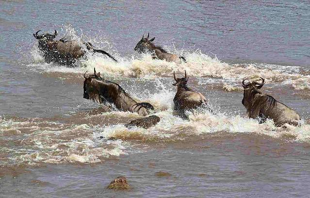 Affordable Kenya migration safari