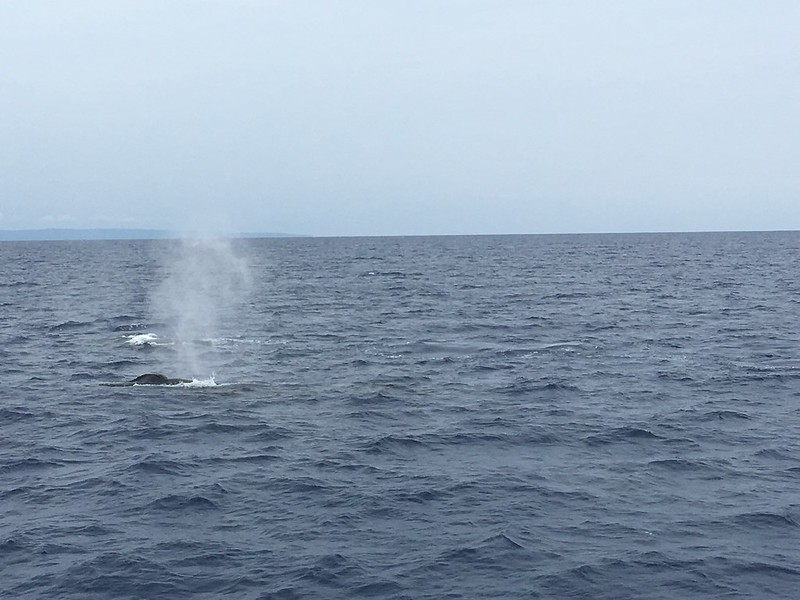 whale blowholes spouting water