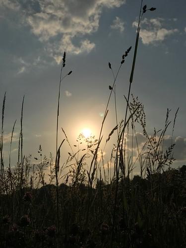 Light & Shadow: Grasses...