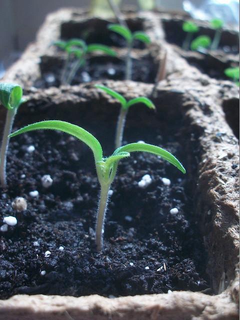 seedling one