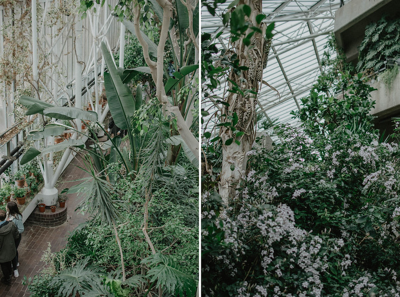 the barbican conservatory 4