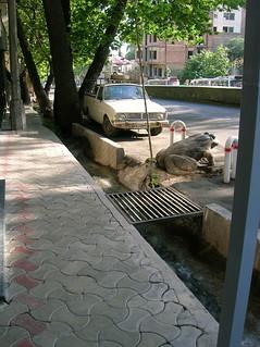 A Joob (Little Canal) on Tehran Street