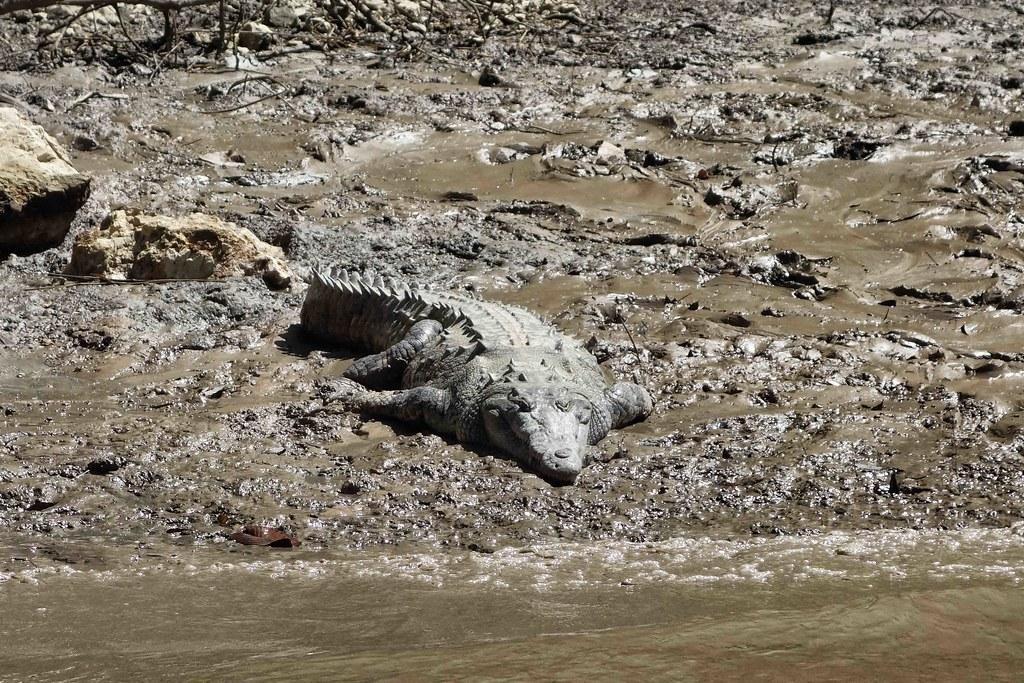 Canon del sumidero - Crocodiles 4