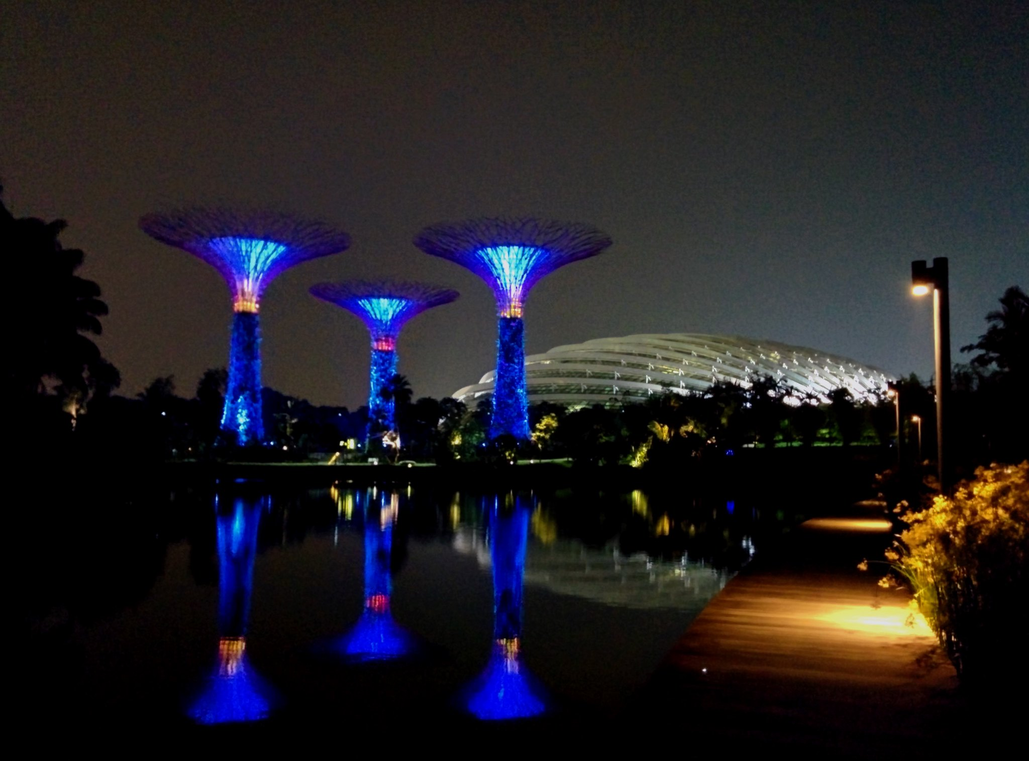 The supertrees lit up at night
