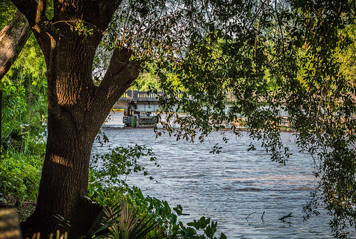 Tree Along the Bayou