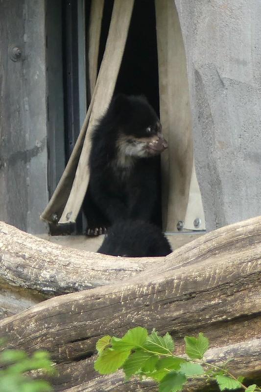 Zoo Frankfurt - 20.05.18