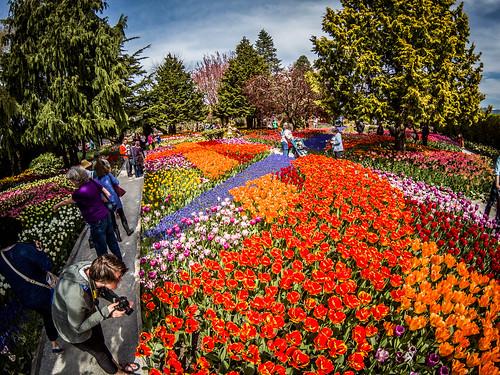 Skagit Valley Tulips-162