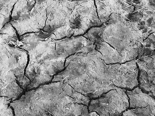 Dry earth - Drought