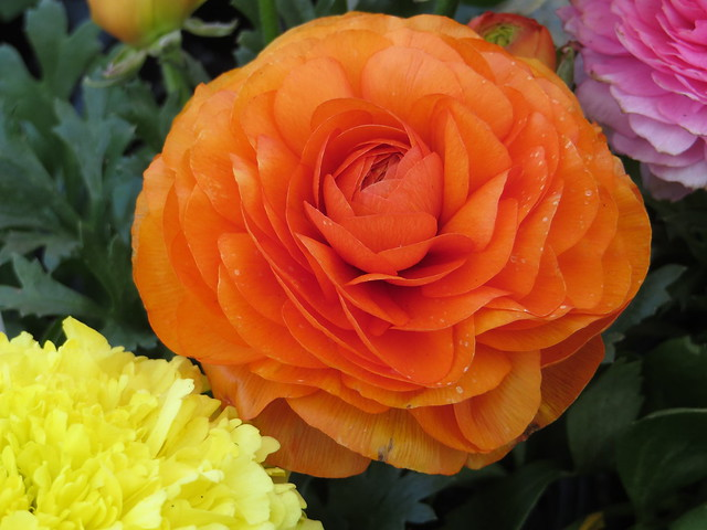 Round Orange Flower