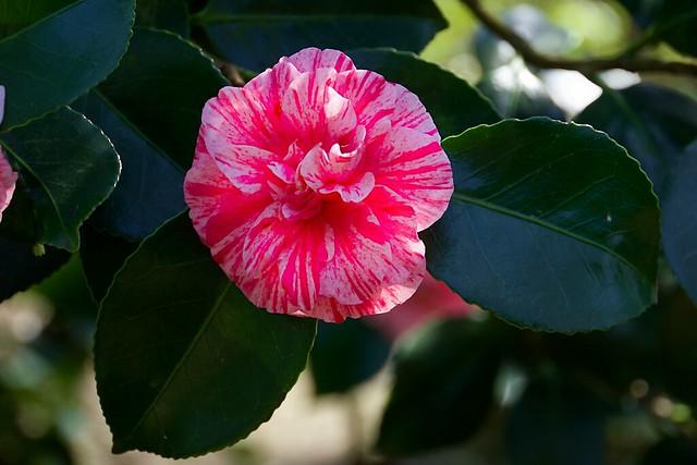 Pretty in Pink, Canon EOS M3, Tamron 18-200mm F/3.5-6.3 Di III VC