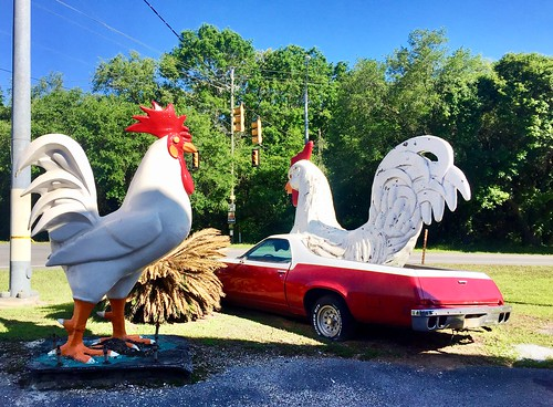 El Camino chickens, Alabama