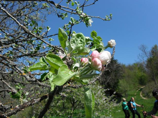 blossom, Fujifilm FinePix XP30