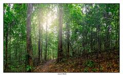 Le layon dans la forêt