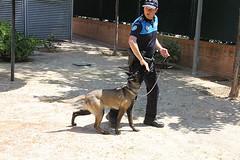 Exhibición Unidad Canina Villanueva del Pardillo