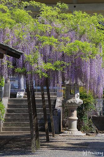 SouShou-ji Temple