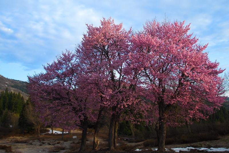 桜のある風景 #6_201804_NO3