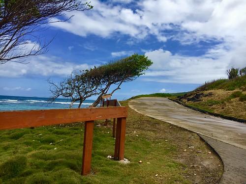 nature thegrenadines bequia caribbean ocean