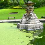 Green algae in the Miller Park fountain