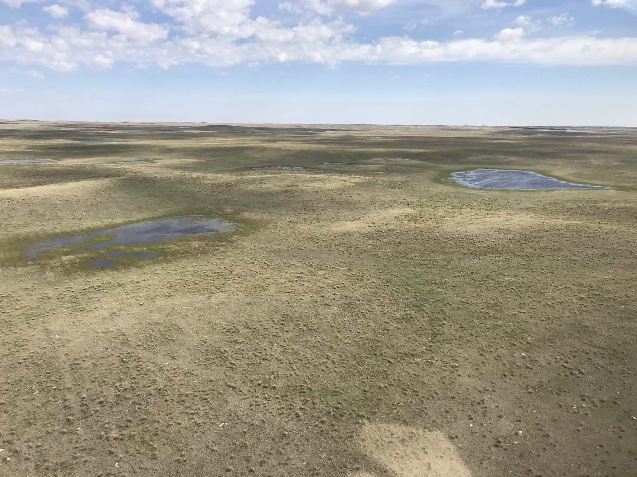 Good to excellent wetland conditions in the southwestern grasslands of Saskatchewan. Photo credit P. Thorpe, USFWS