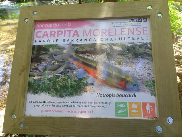 Santuario Carpita del Balsas notropis boucardi