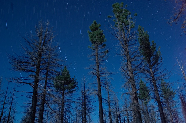 Star trails and shooting stars