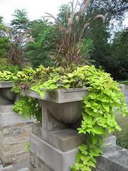 botanical garden, flowerpot, garden, tree, plant, landscaping,